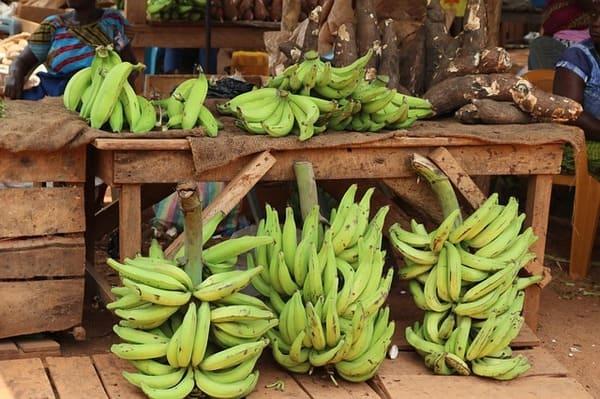 Banane-Pisang-Raja